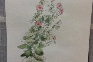Sue Dudill Ile de Re Rose  tremiere
